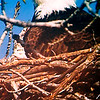 AMBUCS Avian Research