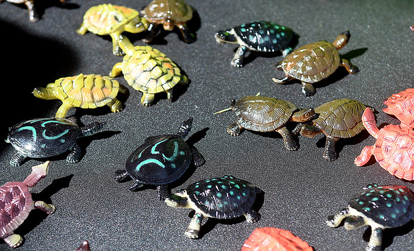 Turtle Invasion