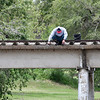 A man watches his line while fishing from the railroad bridge at Meadowlake Paek Wednesday, May 5, 2021. (Billy Hefton / Enid News & Eagle)