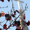Colorful leaves adorn a tree as the cross above the entrance of St. Francis Xavier Catholic Church appears in the background late Monday afternoon. (Staff Photo by BONNIE VCULEK)