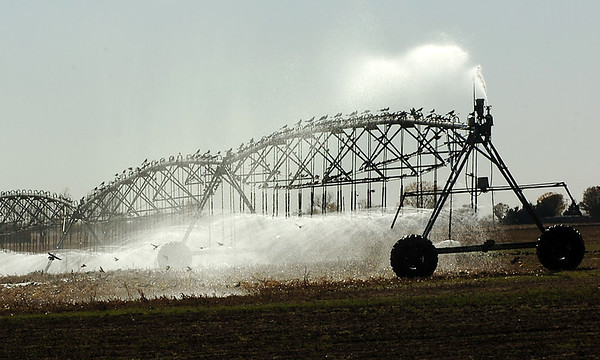 Birds take advantage of the spray from a center pivot irrigation system along north Oakwood Road. (Staff Photo by BILLY HEFTON)