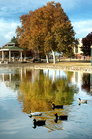 Ducks at Government Springs Park swim across the reflection of a tree Tuesday. (Staff Photo by BILLY HEFTON)