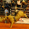 Kasey Hayes, from Liberal, Kan., scores and 87.5 during the Enid PBR Challenge at the Enid Event Center Saturday, Nov. 16, 2013. (Staff Photo by BONNIE VCULEK)