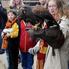 Ali Gilstrap, from Norman, admires Val, a Harris Hawk as the bird of prey lands on Gilstrap's gloved arm during the Royal Gauntlet Birds of Prey flight demonstration at Phoenix Quest Saturday, Nov. 23, 2013. Hundreds attended the first-ever Harry Potter-themed convention at Leonardo's Children's Museum and Adventure Quest in Enid. (Staff Photo by BONNIE VCULEK)