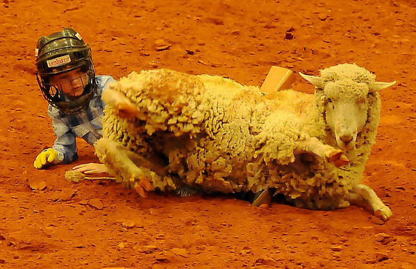 A young cowpoke tames a sheep during the mutton bustin' competition at the Enid PBR Challenge in the Enid Event Center Saturday, Nov. 16, 2013. (Staff Photo by BONNIE VCULEK)