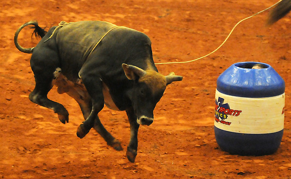 A PBR rodeo clown peeks out of his barrel as a Brahman bull leaps into the air near him during the 2013 Enid PBR Challenge at the Enid Event Center Saturday, Nov. 16, 2013. (Staff Photo by BONNIE VCULEK)