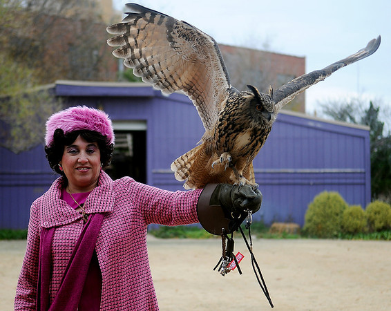 Pamela Vickroy, portrays Professor Delores Umbridge, as she tethers Ritual, a Eurasian Eagle Owl during the Royal Guantlet Birds of Prey flying demonstration at Phoenix Quest Saturday, Nov. 23, 2013. (Staff Photo by BONNIE VCULEK)