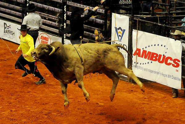 An angry Brahman bull bucks off his rider during the Enid PBR Challenge at the Enid Event Center Saturday, Nov. 16, 2013. (Staff Photo by BONNIE VCULEK)