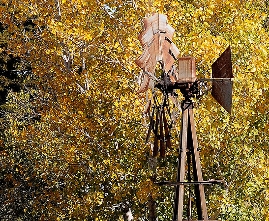 Colorful leaves glisten in the sun, as a windmill's rusty blades spin in the brisk wind Tuesday, Nov. 12, 2013. Temperatures in Enid dropped into the 20s, with the wind chill dipping to 16. (Staff Photo by BONNIE VCULEK)