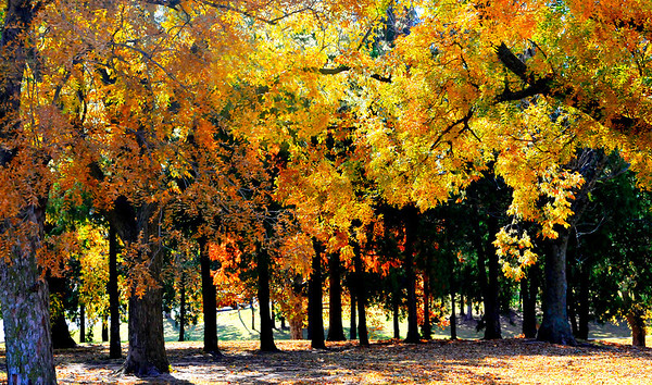 Bright sunshine lights up the color of the trees at Meadowlake Park Monday. (Staff Photo by BILLY HEFTON)