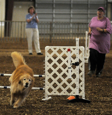 The judge applauds (back) as a golden retriever clears its final obstacle for its handler during the Excellent Jumps with Weaves Agility competition Friday at the Chisholm Trail Expo Center. The Sooner State Kennel Dog Show features more than 350 dogs competing in confirmation or agility thru Sunday. (Staff Photo by BONNIE VCULEK)