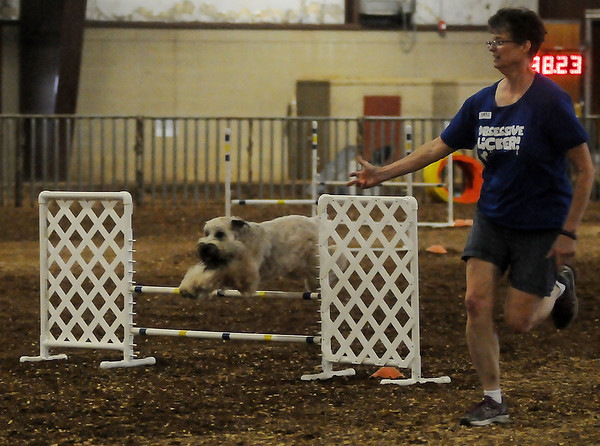 Jetho (left), a Wheaten Terrier, and his agility trainer, Deb Holderman, from Wichita, Kan., compete during the Excellent Jumps and Weaves Agility competition at the Sooner State Kennel Club Show Friday. Jetho finished a clear round in less than 45 seconds. More than 350 dogs will participate in confirmation and agility through Sunday at the Chisholm Trail Expo Center and Pavilion. (Staff Photo by BONNIE VCULEK)