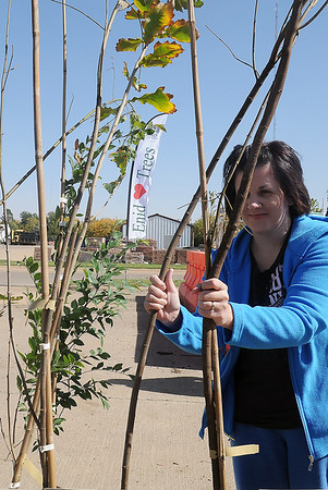Bonita Goodpasture purchases eight trees during the annual Enid Tree Board tree sale at the City of Enid Service Center Thursday. The sale, which includes Japanese white silk lilacs, swamp white oaks, allele lace bark elms, redbuds and maples, continues Friday and Saturday until the five dollar trees are all sold. (Staff Photo by BONNIE VCULEK)