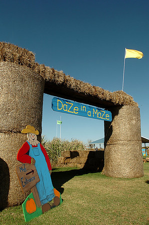 Entrance to the maze at Daze in a Maze south of Covington. (Staff Photo by BILLY HEFTON)