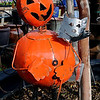 A unique pumpkin man sculpture greets customers at Plants-a-Plenty Friday. With Halloween approaching, area businesses and residents are adding festive landscape decorations. (Staff Photo by BONNIE VCULEK)