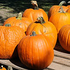 Pumpkins await purchase at Christ United Methodist Church's Pumpkin Patch Wednesday. (Staff Photo by BONNIE VCULEK)