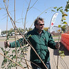 Tom White, chairman of the Enid Tree Board, holds trees that a client has selected for purchase Thursday during the boards annual tree sale at the City of Enid Service Center. (Staff Photo by BONNIE VCULEK)