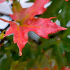 A raindrop clings to a leaf at Meadowlake Park Thursday. (Staff Photo by BILLY HEFTON)