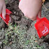 Taft Elementary School students use miniature red shovels as they dig holes for red tulip bulbs around the school to symbolize their promise to remain drug free during red ribbon week festivities for Enid Public Schools. Once the tulips bloom, students will be reminded of their drug free pledge. (Staff Photo by BONNIE VCULEK)