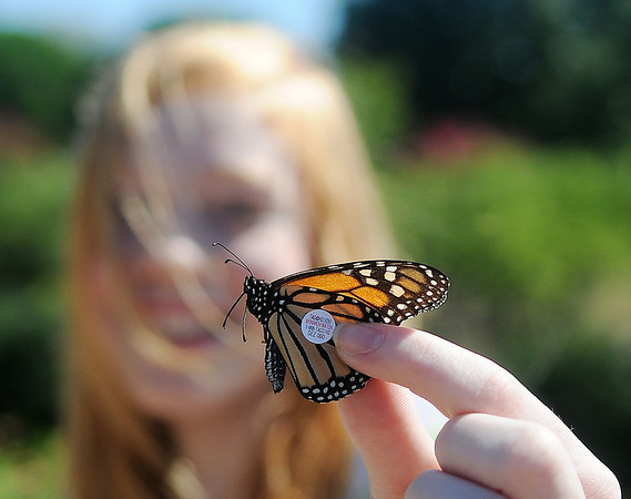 Shaylee Finchum holds a tagged Monarch butterfly at Dillingham Gardens Tuesday, Oct. 1, 2013. Lincoln Middle School students, their instructor Connie Hood, and retired professional educator George Ann Ford met at Government Springs Park during a Monarch Watch with Kansas University. After the Monarchs were netted and tags were placed on the discal scale, the adult butterflies were released. (Staff Photo by BONNIE VCULEK)