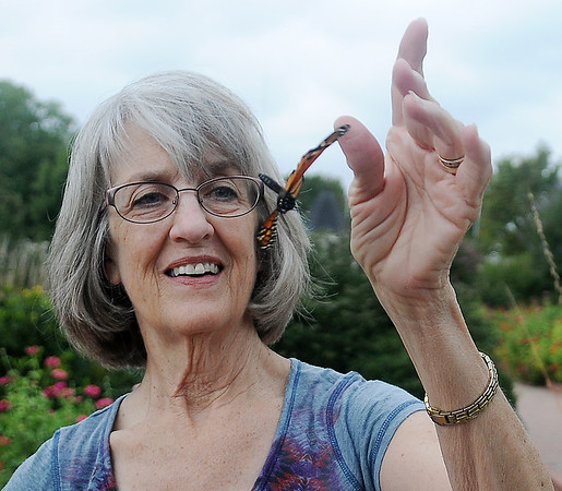 George Ann Ford releases a male Monarch butterfly after tagging it during Monarch Watch at Dillingham Gardens Wednesday, Oct. 2, 2013. Ford orders tags from Kansas University each May and then locates and tags the beautiful creatures during their migration until she uses all of the tags. Ford also teaches Lincoln Middle School students and their instructor, Connie Hood, how to net and tag each year. (Staff Photo by BONNIE VCULEK)