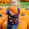 Faithlynn Hagermann, 2-year-old daughter of Brittney and Nate Hagermann, selects a pumpkin from Christ United Methodist Church's Pumpkin Patch Thursday, Oct. 3, 2013. (Staff Photo by BONNIE VCULEK)