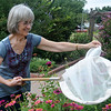 George Ann Ford nets a Monarch as she tags the beautiful butterflies at Dillingham Gardens Wednesday, Oct 2, 2013. Ford, a retired professional educator for Enid Public Schools, orders tags for the yearly Monarch Watch with Kansas University. (Staff Photo by BONNIE VCULEK)