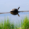 A turtle catches some sun rays Thursday at the lake on the NOC Enid campus.(Staff Photo by BILLY HEFTON)