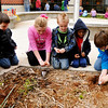 Fourth graders at Prairie View Elementary help pre-kindergarteners plant red tulip bulbs as part of Red Ribbon Week. (Staff Photo by BILLY HEFTON)