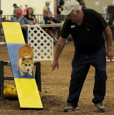 Cher, a Welsh Corgi, scurries down a teeter totter as her owner, Bob Portiss (right), from Claremore, offers encouragement during the Sooner State Kennel Club obedience competition at the Chisholm Trail Pavilion Saturday, Oct. 12, 2013. (Staff Photo by BONNIE VCULEK)