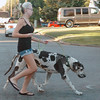 A woman keeps up with her great dane as they walk along east Randolph Monday. (Staff Photo by BILLY HEFTON)