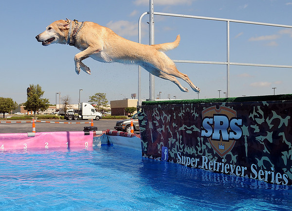 Whoopsy, a 4-year-old yellow lab owned by Shannon Nardi, sails from the Super Retriever Series Super Dock as she retrieves a toy at Oakwood Mall Friday, Oct. 4, 2013. (Staff Photo by BONNIE VCULEK)