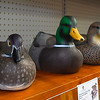 A shelf of decoys at the Academy store on west Garriott. The store opens today with a grand opening scheduled for next week. (Billy Hefton / Enid News & Eagle)