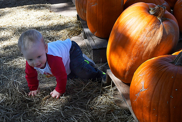 Shepherd Stinson crawls among the pumpkins at Christ United Methodist Church's Pumpkin Patch Thursday October 12, 2017. (Billy Hefton / Enid News & Eagle)