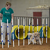 Katherine Emge watches as Gracie maneuvers through poles during an agility competition in the Sooner State Kennel Club Dog Show Friday October 13, 2017 at the Chisholm Trail Expo Center. (Billy Hefton / Enid News & Eagle)