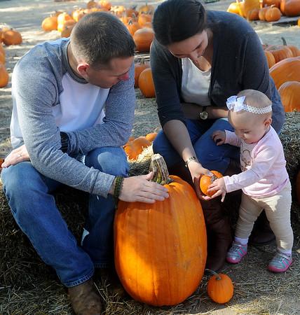 Great Pumpkins