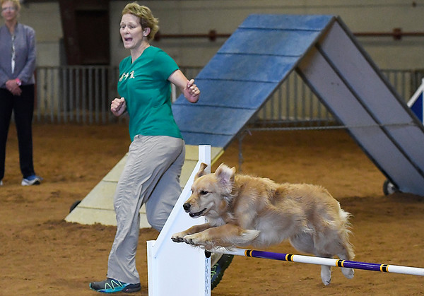 Gracie clears a jump as Katerine Emge leads her through an agility competition in the Sooner State Kennel Club Dog Show Friday October 13, 2017 at the Chisholm Trail Expo Center. (Billy Hefton / Enid News & Eagle)