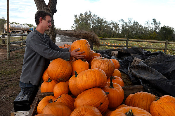 Michael McClure stacks pumpkins at Otto Farm west of Ringwood on U.S 412 Monday October 15, 2018. (Billy Hefton / Enid News & Eagle)