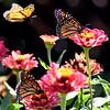 Three Monarchs