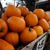 Pumpkins at Otto Farm west of Ringwood on U.S 412 Monday October 15, 2018. (Billy Hefton / Enid News & Eagle)