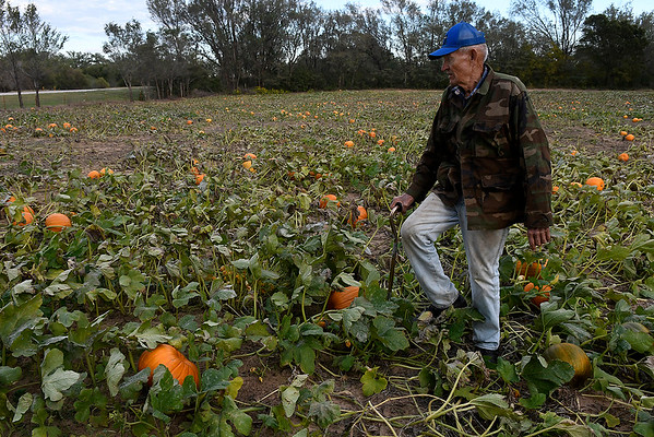 Otto Hildebrand walks through a pumpkin patch at this farm west of Ringwood on U.S 412 Monday October 15, 2018. (Billy Hefton / Enid News & Eagle)