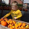 Jaxon Miller picks a small pumkin at the Christ United Methodist Church's Pumpkin Patch Friday, October 5, 2019. (Billy Hefton / Enid News & Eagle)