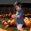 Vivian Herrera inspects a pumpkin at the Christ United Methodist Church Pumpkin Patch Friday September 30, 2016. (Billy Hefton / Enid News & Eagle)