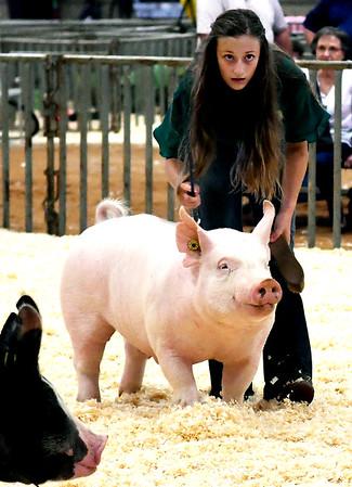Garfield County Fair Swine Show