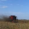 A combine harvest a corn field northeast of Enid Monday, September 21, 2020. (Billy Hefton / Enid News & Eagle)