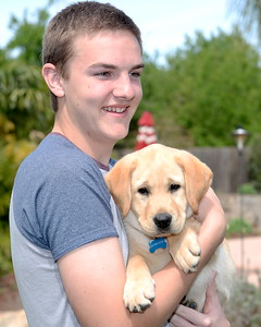 10-week-old yellow lab Enloe gets to know one of his new owners, 17-year-old Garrett Hunt at their Durham, Calif. home Tues. April 4, 2017. Enloe will be trained by Dina Zaphiris, founder & CEO, InSitu Foundation as a cancer finding dog. (Bill Husa -- Enterprise-Record)