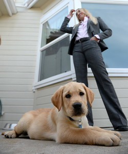 10-week-old yellow lab Enloe lies down at his new home with the Hunt Family at their Durham, Calif. home Tues. April 4, 2017. Enloe will be trained by Dina Zaphiris, standing, founder & CEO, InSitu Foundation as a cancer finding dog. (Bill Husa -- Enterprise-Record)