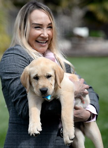 10-week-old yellow lab Enloe makes friends with his new family,  Jeff, Traci and 17-year-old Garrett Hunt at their Durham, Calif. home Tues. April 4, 2017. Enloe will be trained by Dina Zaphiris, founder & CEO, InSitu Foundation as a cancer finding dog. (Bill Husa -- Enterprise-Record)
