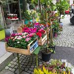 2017-09 European Trip - Lindsey's Photos_0005 - Salzburg
