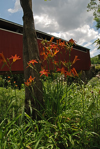 Tiger Lilies at the Bridge